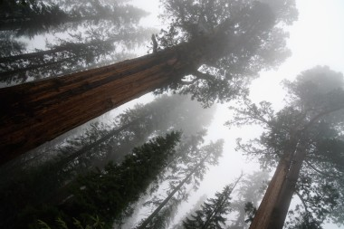 enter the sequoias